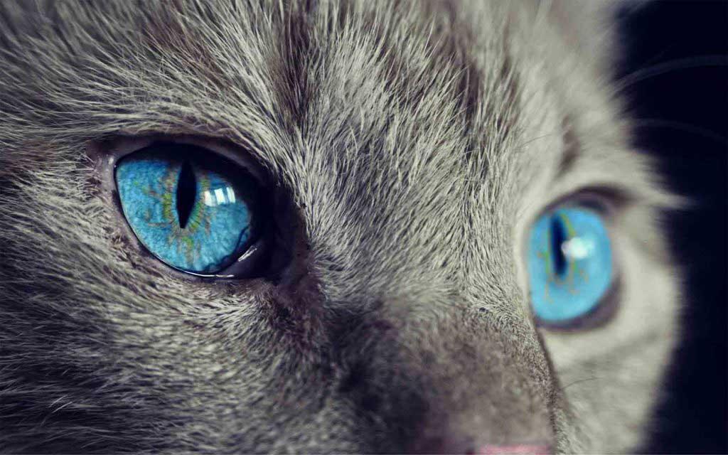cat-eyes-mystic